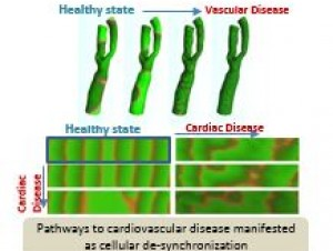 Image :NRN049 - Understanding Aspects of Cardiovascular Disease via A Multi-Physics Modelling Methodology